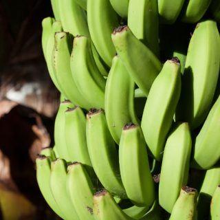Biomassa de banana verde: um poderoso aliado para a sua saúde (Inclui a receita!)