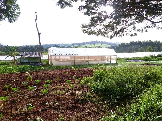 fazenda vista alegre organicos