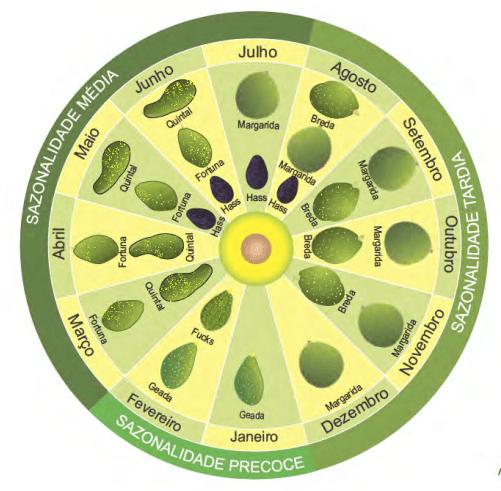 sazonalidade do abacate