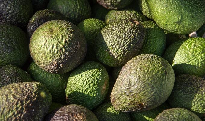 diferenca avocado e abacate